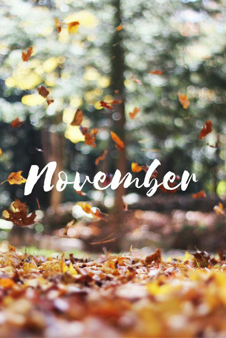 #CartolineDalMondo: benvenuto Novembre